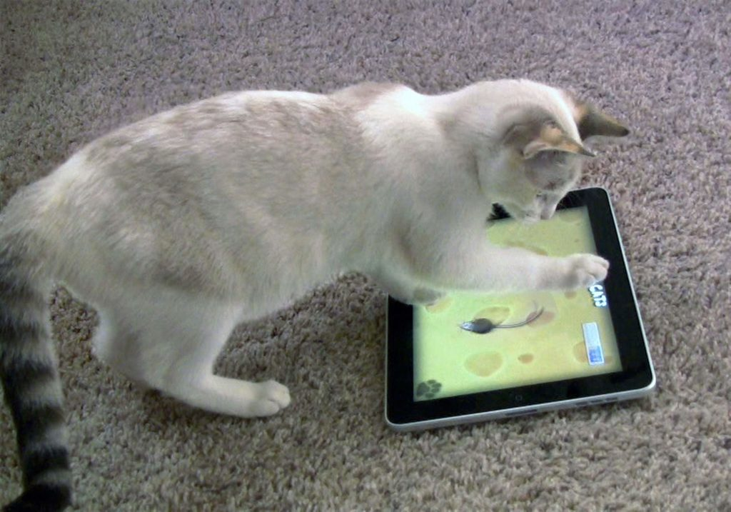Those second-rate competing tablets have a big future ahead, in cat games and landfill.